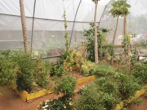 Huertos Familiares Biointensivos: Doble excavacion y Semillas